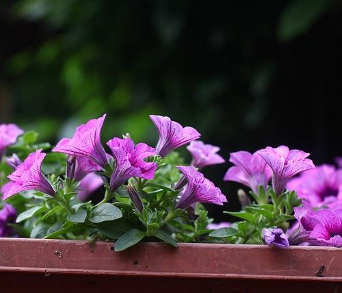 granny flat garden ideas